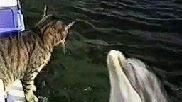Игры кота и дельфина смотреть видео прикол - 1:49