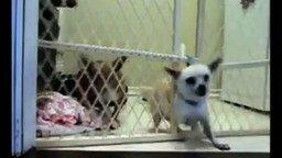 Смотреть Побег собачек из заключения