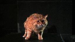 Отряхивающаяся кошка смотреть видео прикол - 0:34
