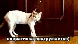 Кот и поводок смотреть видео прикол - 0:44
