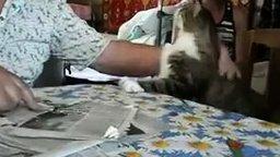 Смотреть Ну погладь кота!