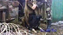 Люди вызволяют животных смотреть видео прикол - 4:04