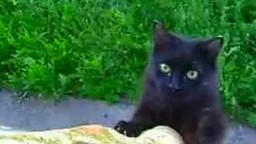 Кот идёт домой... смотреть видео прикол - 0:15