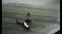 Смотреть Хитрая белочка во время драки