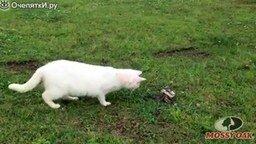 Смотреть Кот против змеи