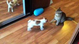 Смотреть Щенок и котяра в борьбе