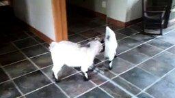 Встретились два козла... смотреть видео прикол - 1:11