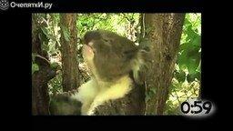 Чихающие животные смотреть видео прикол - 1:08