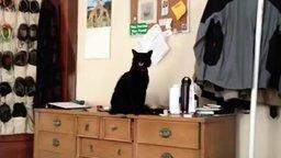 Наглый кот и банка смотреть видео прикол - 0:19