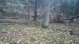 Смотреть Что-то страшное затаилось в лесу...