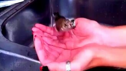Смотреть Птичка купается в женских руках