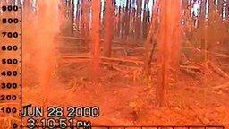 Смотреть Вид пожара изнутри