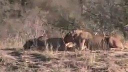 Редкие кадры из дикой природы смотреть видео прикол - 8:24
