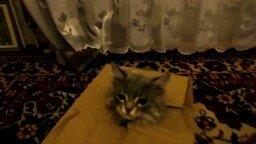 Смотреть Котёнок сам себя распаковывал