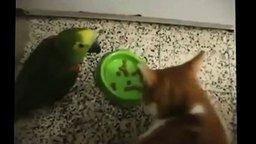 Кот и попугай выясняют отношения смотреть видео прикол - 0:36