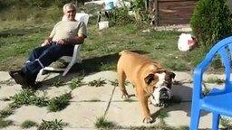 Смотреть Пёс-силач забирается на стул