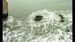 Смотреть Случайно встретили русалку