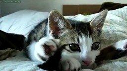 Котёнок йог смотреть видео прикол - 0:44