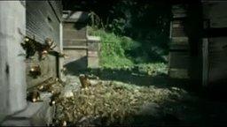 Нападение шершней на пасеку пчёл смотреть видео прикол - 3:38