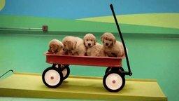 Смотреть Оригинальный реклама собачьего корма
