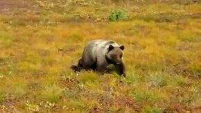 Медведь, пошёл отсюда! смотреть видео прикол - 1:35