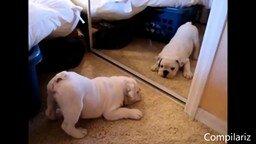 Смотреть Подборка - Животные против зеркал