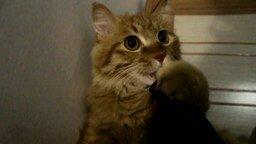 Смотреть Любовь кота к пылесосу