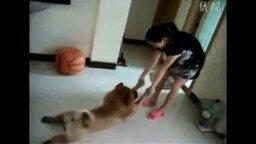 Смотреть Собаки, которые не любят купаться