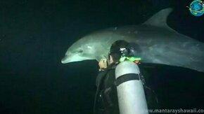 Смотреть Дайвер помог дельфину