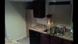 Смотреть Грандиозный побег собаки из кухни