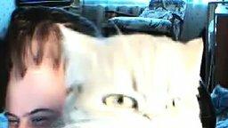 Смотреть Кот в кривом зеркале