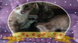 Смотреть Любимые кошки