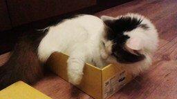 Кошка в узкой коробке смотреть видео прикол - 0:59