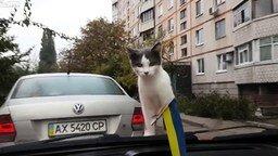 Смотреть Котёнок такого не ожидал!