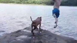 Смотреть Пёс бросился спасать хозяина