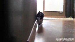 Кот из-за угла смотреть видео прикол - 0:34