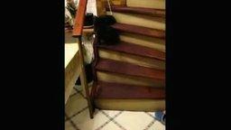 Смотреть Кошка из Секретных материалов
