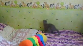 Котёнок против лазерной точки смотреть видео прикол - 0:16