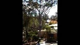 Быстро, однако, свалил дерево смотреть видео прикол - 0:30
