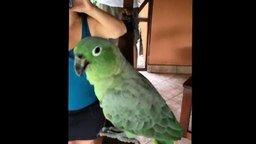 Смотреть Попугай, который умеет смеяться