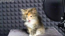 Песенка от котят смотреть видео прикол - 0:49