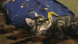 Реакция кота на муху смотреть видео прикол - 1:11