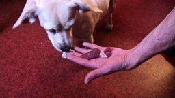 Собака-вегетарианка смотреть видео прикол - 3:38