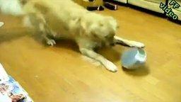 Собака против железной миски смотреть видео прикол - 0:39