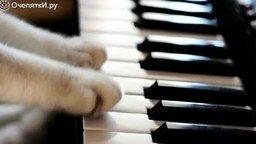 Смотреть Истинный кошачий блюз