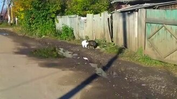 Смотреть Белый кот и лужа