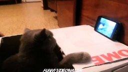 Смотреть Кот смотрит на кошачью драку