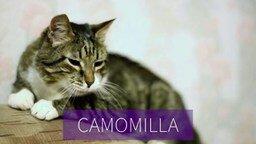 Смотреть Реклама швабры с кошками