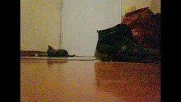Смотреть Странный котёнок в коридоре