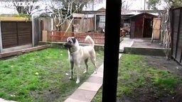 Смотреть Радость собаки от встречи